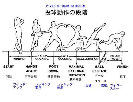 pitching motion phase.jpg