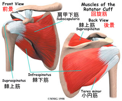 rotator-cuff-muscles2.jpg